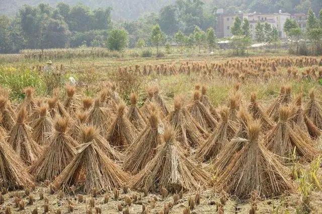 秸秆瓦从生产诞生,在农民手里的秸秆经历了什么?