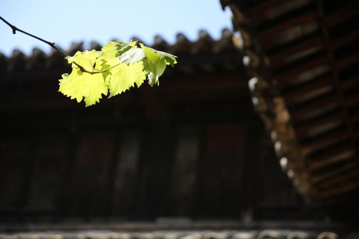 manbetx客户端网页版万博官网manbetx电脑版瓦讲述:中国瓦文化,解答瓦的历史
